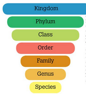 how to create a cladogram
